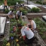 Rooftop Gardening 04